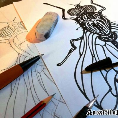 Designing The Fly Art By Anexitilon For The Sacred Tooth Brand